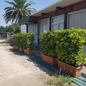 Garden Center Mediterraneo Vendita Prodotti Per Il
