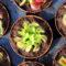 Piante carnivore: coltivazione e cura