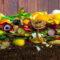 Compost per concimare le tue piante
